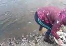 Hediyemi isterim - En Kolay Balık Avı ) Facebook