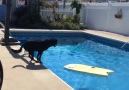 He found a way to get his ball without getting wet via Newsflare