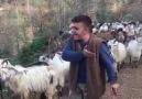 Helal Olsun Çoban Kardeşimize.. Ağzına Yüreğine Sağlık..