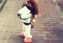 Hele bak Köpeği maymuna çevirmişler