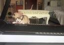 Help this poor cat...Credit @OMG
