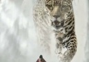 Her inner strength is the Leopard. She and the Leopard are One E.S