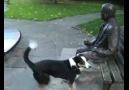 Heykeli gerçek insan sanan köpek :)