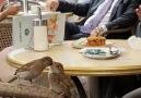 Hıdır Şatana - Muhtesem bir dayanisma kahvemi icerken...
