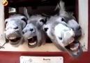 HILARIOUS Donkeys Make Funny Faces!