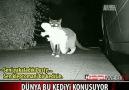 Hırsız Kedi !!!