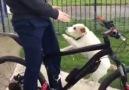 His dog goes everywhere with him via Newsflare