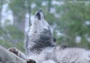 His howl can change the world because it can change people.