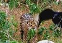 Hız Öldürür! | Jaguar