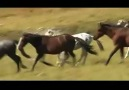 Honouring the Horses-Nomadic music  by AltaiKai (Central Asia)