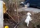 Horonun Gözüne Vuran Köpek -) -) -) -)