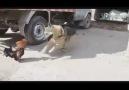 Horoz-köpek kavgası..