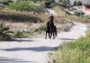 Horse Lovers - Amazing!A true horse whispererPagina...