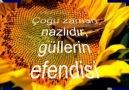 Hozan dino/yare yare.. (Ebolla21_47)