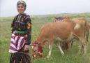 Hülya Polat & Volkan Konak  Çikardum Sığırlari