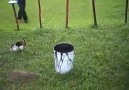 Hunili Sözlük - 1. Geleneksel kedi olimpiyatından ilk...