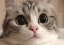 I could stare into this cats eyes forever