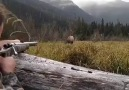 If you like please share and like Best and hunting videos