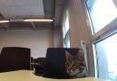 İKBU kedileri öğrencilerimizi şimdiden özledi!