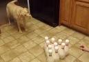İlginç köpekler