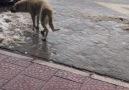 İlhan Öztunç - Abi Turkiyenin Köpeği Bile Bir Değişik Yaw...
