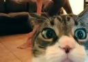 İlk defa kamera gören masum kedi.. :))