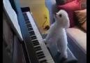 I'm a pianist!!!