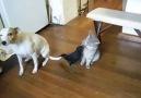 Imperdible !! Un pájaro alimentando un gato y un perro ??