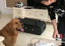 İnsan Dostunun Gidişine Dayanamayıp Valizini Toplayan Köpek!