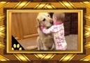 insanlığa Hediye Sadık Köpekler
