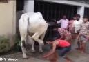 İnsanoğlunun hayvanlarla imtihanı