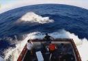 İnsan ve Hayvan Karşılaşmaları Merlin Balığı Saldırısı