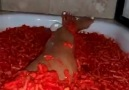 In The Know Daily - This girl is taking a bath in Flamin Hot Cheetos Facebook