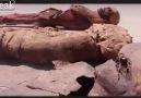 Işid,binlerce yıllık mumyaları kamyonla ezdi