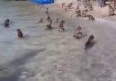 Island of monkeys in Thailand
