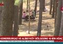 İstanbula dev kent ormanı yapılıyor