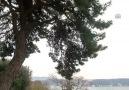 İstanbul'da 5 bini aşkın ağaç MR'a girdi