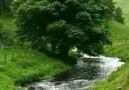 İşte huzur... Doğanın muhteşem güzelliği - Mavi Düşler Sokağı