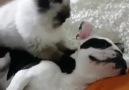 It&beautiful love the cat