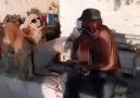 It's A Sad, Sad Dog That Sings The Blues