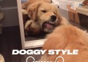 It&&Golden Retriever&Day! Here&why they deserve their own special day