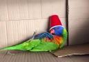 I think my parrot is broken...