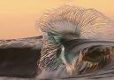 Iurie Belegurschi - Amazing wave! Facebook