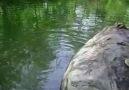 ivrindi-kocadere elle balık avı