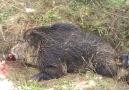 iznik avcılar derneği domuz vuruş anı -20