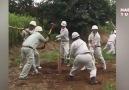 Japon disiplini