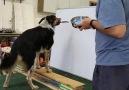 Jumpy dog art