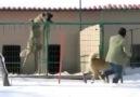 Kaç tane köpek var sayabildinizmiDaha fazlası için destek Kangal Köpekleri