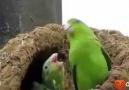 Kafası güzel kuşlar
