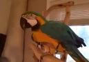 Kahkaha Atan Papağan :)